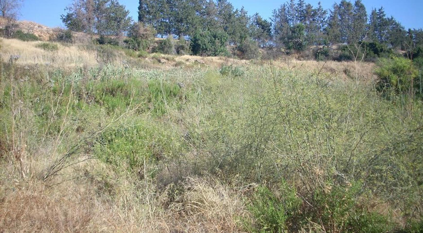 Large Building Plot with Sea Views in Kouklia - 6