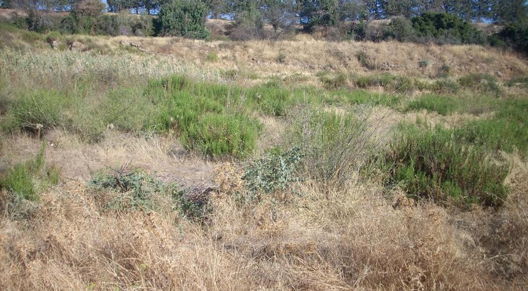 Large Building Plot with Sea Views in Kouklia - 3
